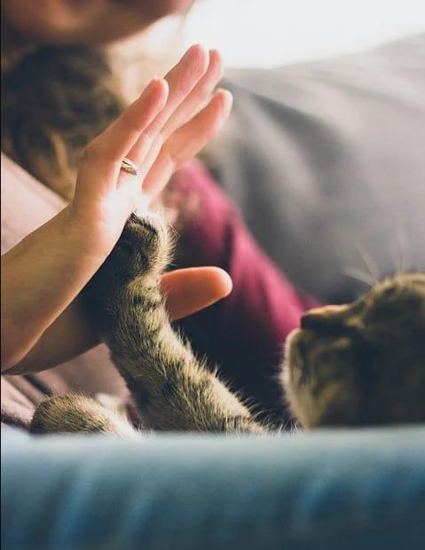 تطبيق ترجمة مواء القطط
