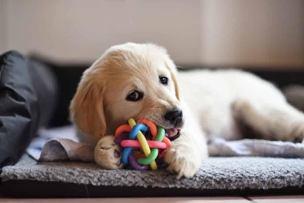 هذه الألعاب تفضّلها الكلاب