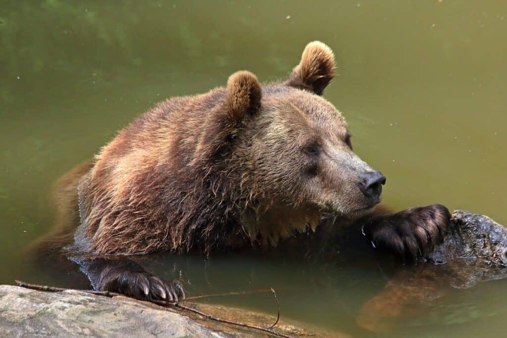 في كوكب يحترّ: كيف تتكيف الحيوانات مع تغيّر درجات الحرارة؟