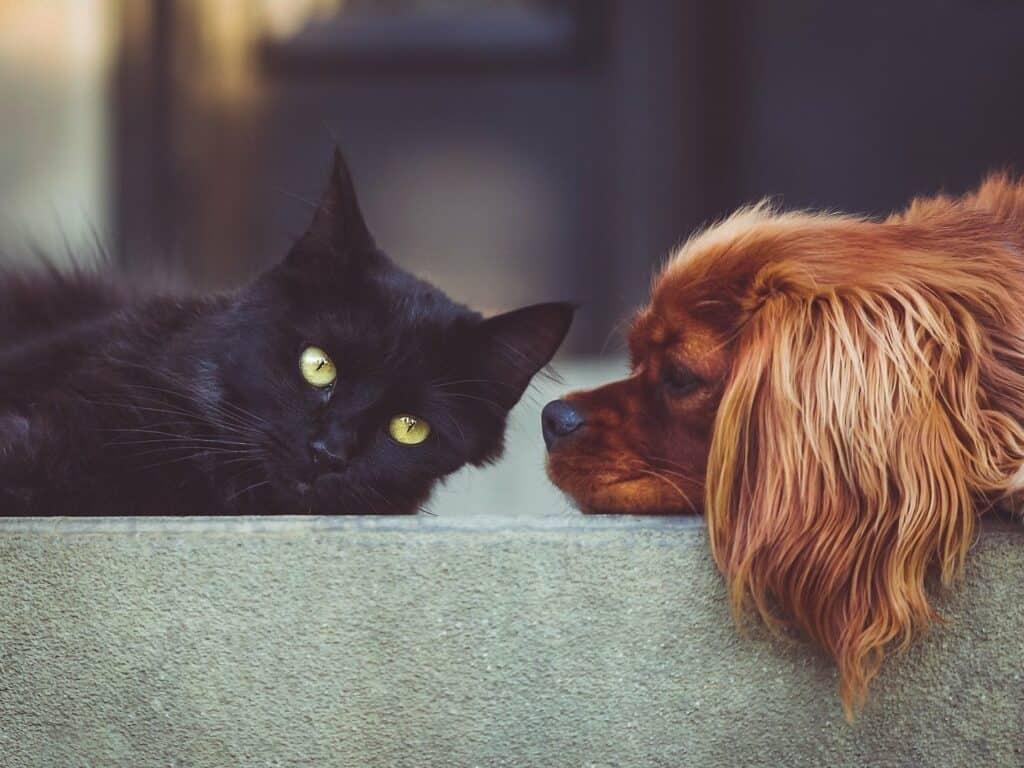 حبّك للقطط أو الكلاب يخبرك بعض السمات عن شخصيتك