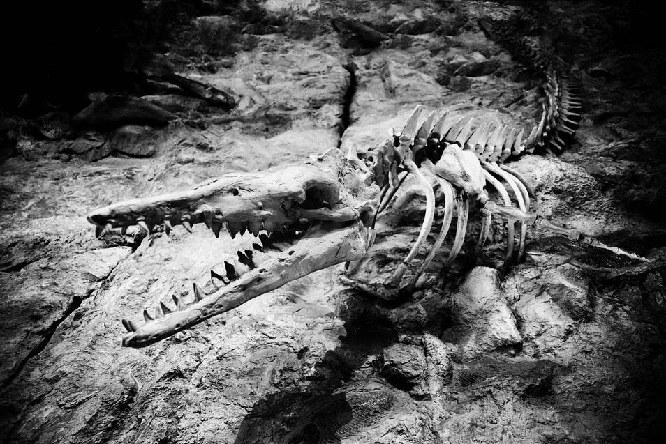 أصغر ديناصور وتمساح سار على قدمين: أبرز الاكتشافات الجيولوجية في 2020