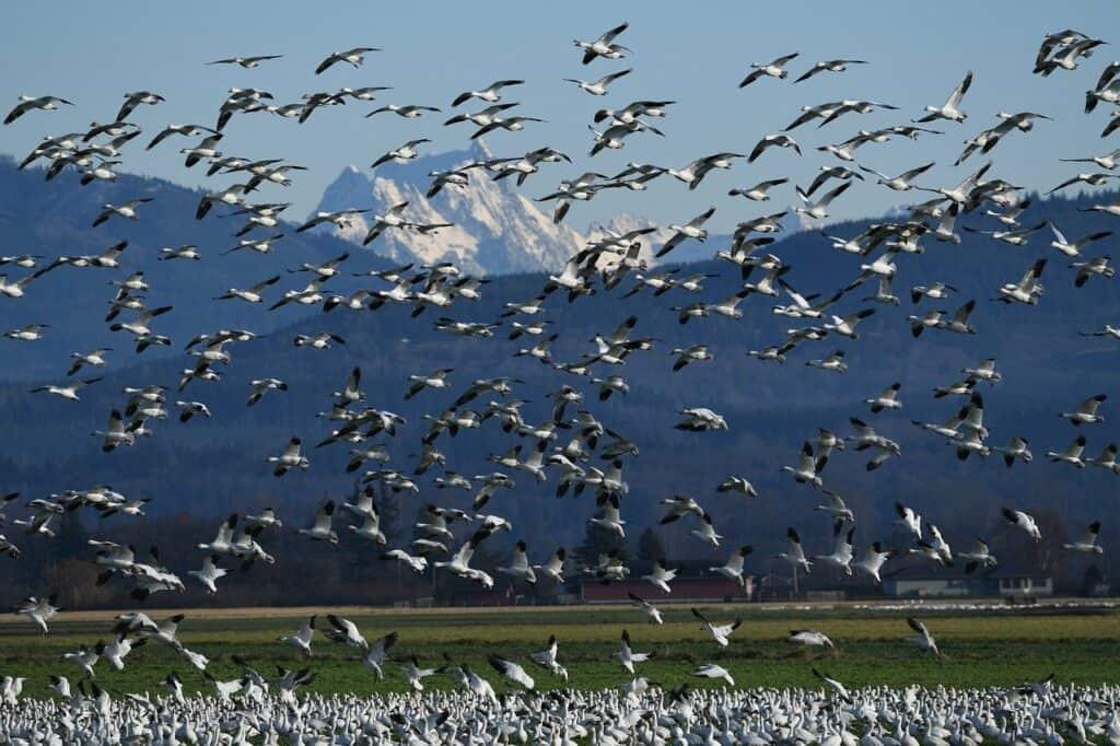كيف تعرف الحيوانات طريق العودة إلى وطنها؟