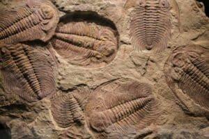 الحفاظ على الحفريات قد يساهم في فهم أفضل للصحة