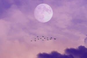 حكاية علمية: نظريات غريبة فسّر بها البشر هجرة الطيور
