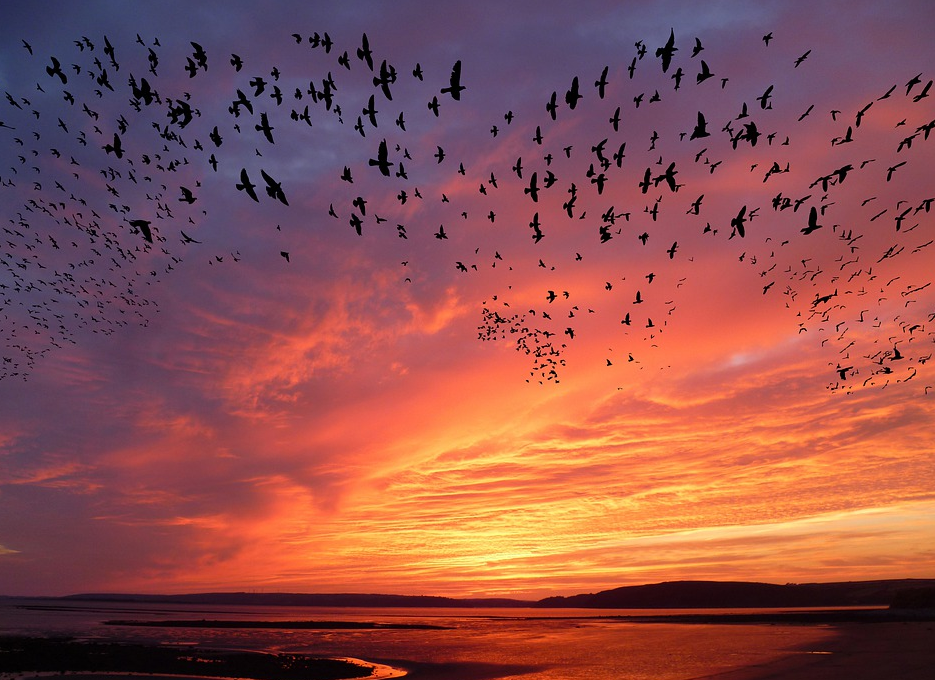 سلسلة الشتاء: الهجرة أو كيف تنجو الطيور من برد الشتاء