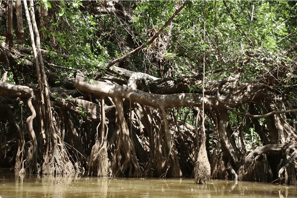 التغير المناخي: توثيق سبب انقراض أشجار المانجروف في عُمان