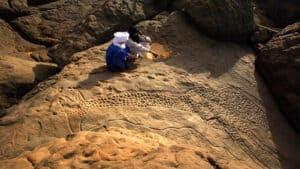 من خليج سرت في ليبيا: كيف تحولت غابات شمال أفريقيا إلى صحراء؟