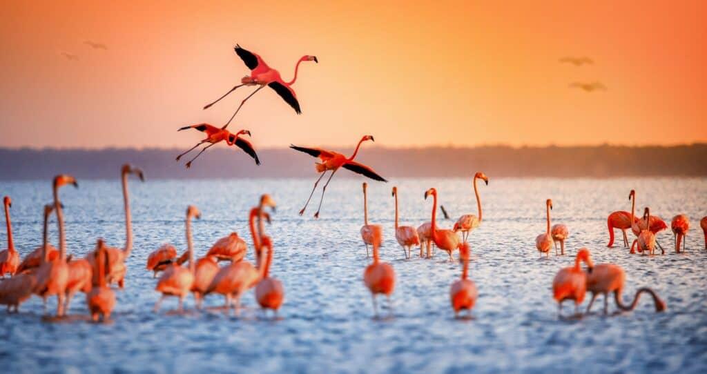 طائر الفلامنغو: كل ما تريد معرفته عن هذا الوردي الفاتن