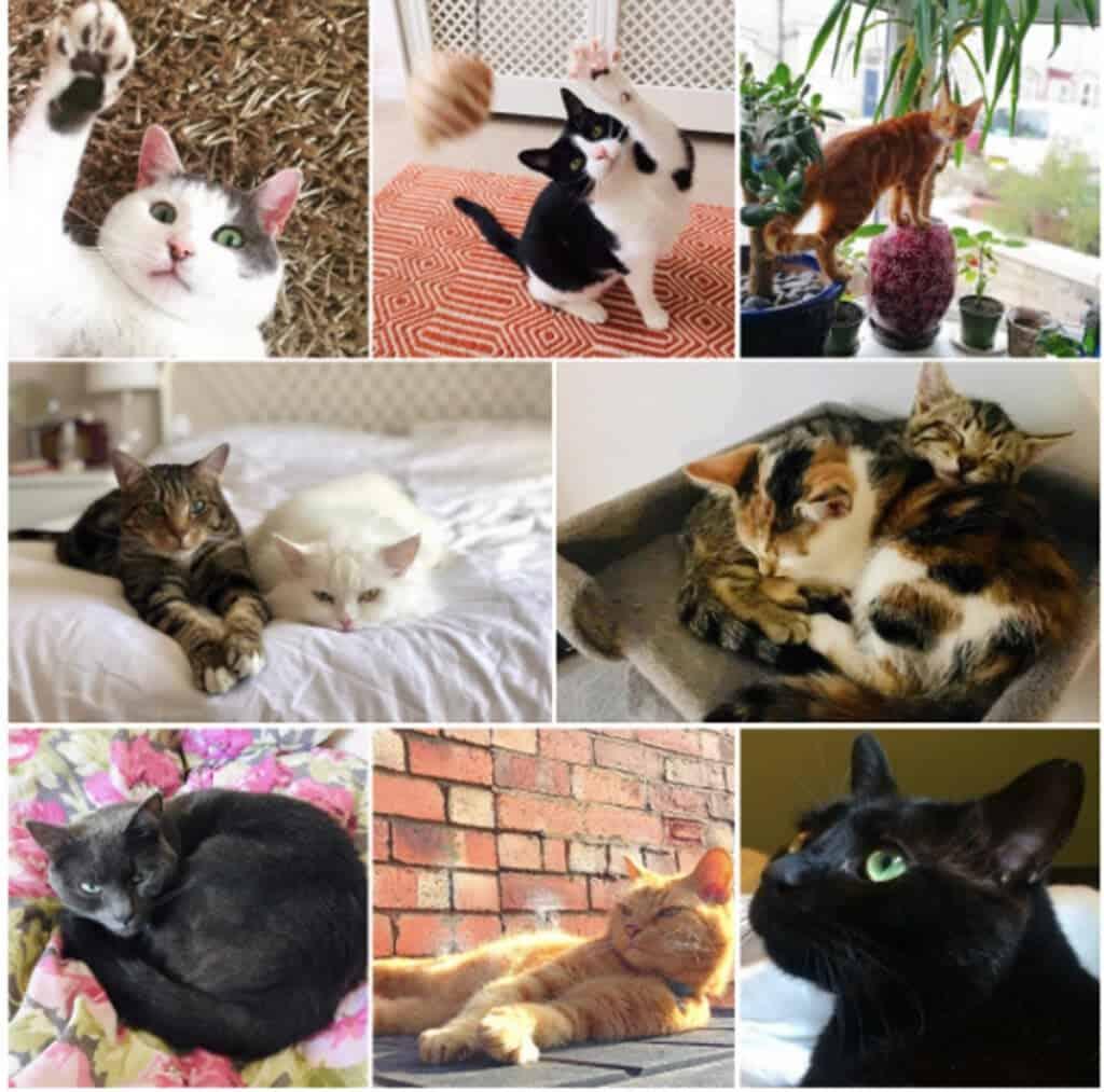 القطط, تربية القطط, مداعبة القطط