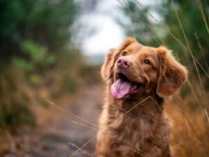 هل الكلاب أذكياء حقاً؟