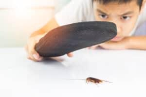 افعلها بنفسك: كيفية القضاء على الصراصير بدون مبيدات
