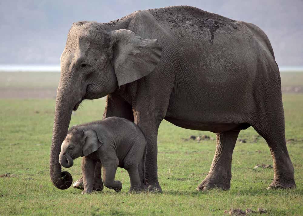 هل تمر الحيوانات بسن المراهقة؟