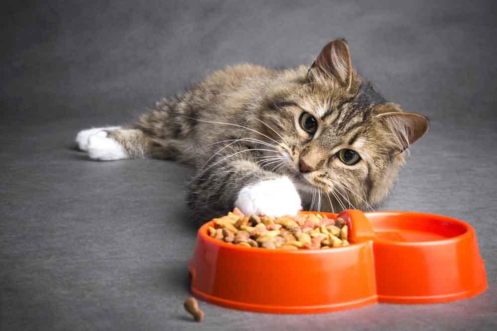 هل طعام القطط آمن للاستهلاك البشري؟