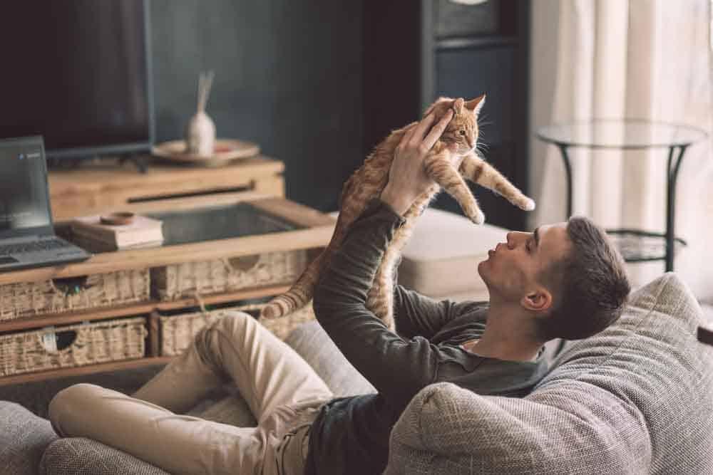 هل تتخلى القطط عن أصحابها في الأوقات الحرجة؟