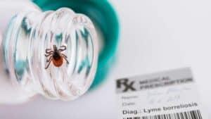 دواء جديد قيد الاختبار للوقاية من مرض «لايم»