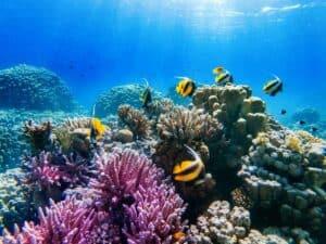 بماذا تخبرنا الأصوات في المحيطات عن حالة الشعب المرجانية؟