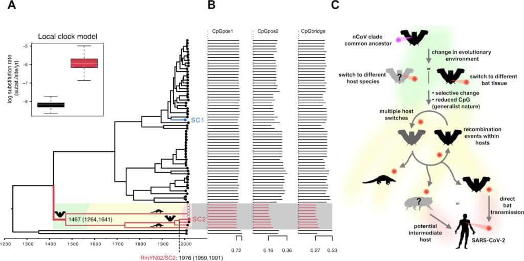 فيروس كورونا انتقل من الخفافيش إلى البشر دون تغيّر