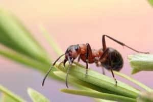 متوفرة وسهلة الاستخدام: إليك طرق التخلص من النمل