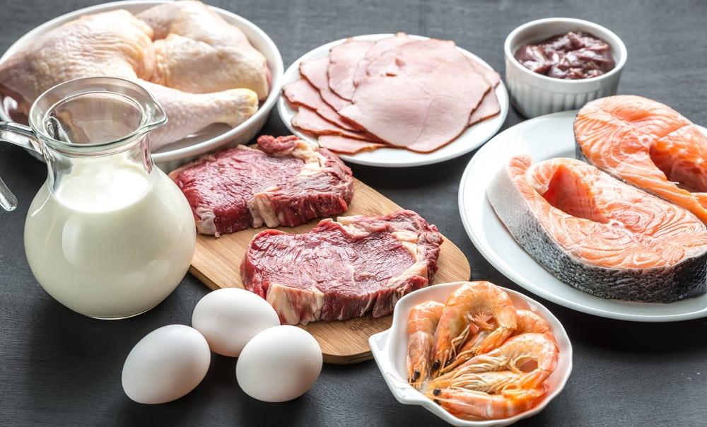 البروتين النباتي البروتين الحيواني