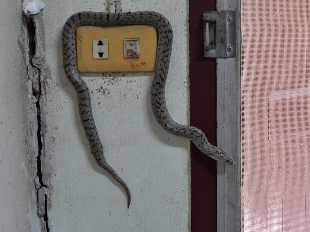كيفية التخلص من الثعابين المنزلية