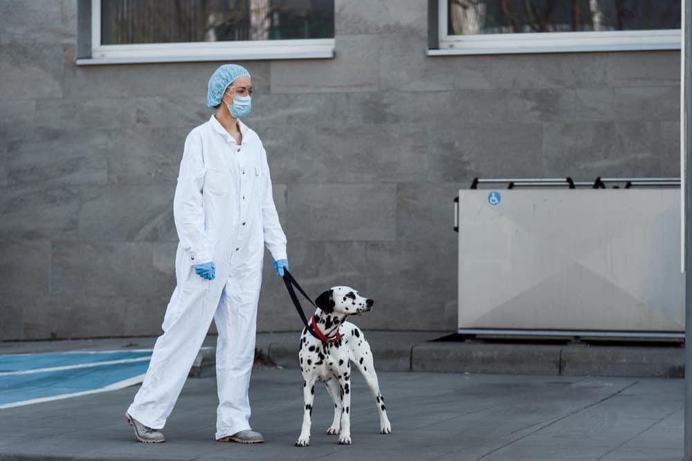 بعض من تطورات كورونا في العالم ودور الكلاب في الكشف عن الفيروس