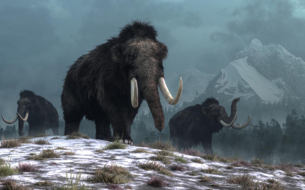 الماموث المسكين: البشر تسببوا في انقراضه قبل أوانه بـ 4 آلاف عام
