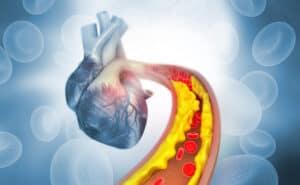 ينبض بلا هوادة: كيف يعمل القلب؟