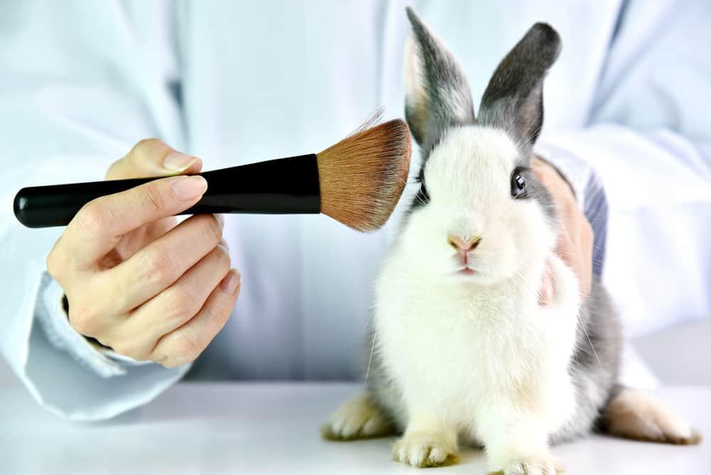 طرق اختبار مستحضرات التجميل على الحيوانات