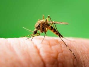 العلماء يبتكرون لقاحاً لمكافحة الملاريا هو الأكثر فعاليةً على الإطلاق
