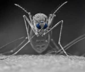أسرار البعوض 3: أمراض ينقلها البعوض والتخلص من الحكة