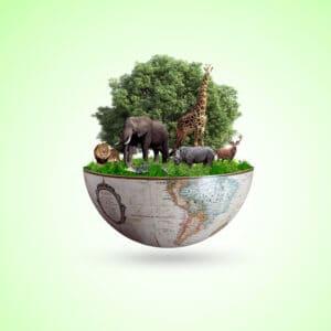 سنواجه أوبئةً مرعبة: الأمم المتحدة تدعو لمعالجة فقدان التنوع البيولوجي