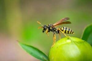 دليلك لتجنب لسعات النحل والدبابير والتعامل معها