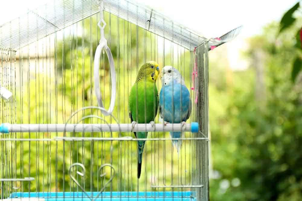 قد تكون السالمونيلا موجودةً في مُطِعمات الطيور: إليك طريقة التخلص منها
