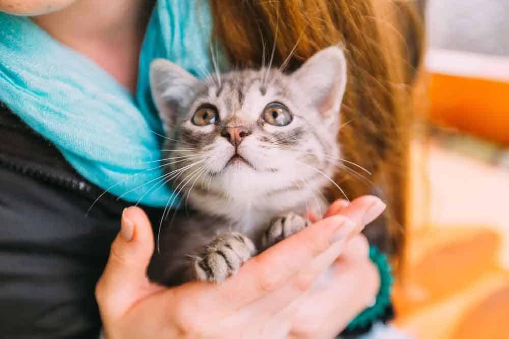 على عكس ما يبدو: القطط تحب أصحابها وتتعلق بهم