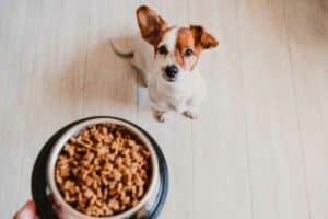 طعام الكلاب المصنوع منزلياً يمكن أن يحرمها من المغذّيات الأساسية