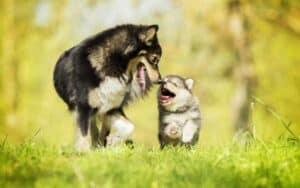 هل تستخدم الكلاب كلمات للتواصل عندما تنبح؟