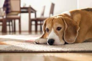 لا تترك حيوانك الأليف وحيداً لفترة طويلة