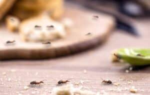طرق بسيطة لإبعاد النمل عن منزلك
