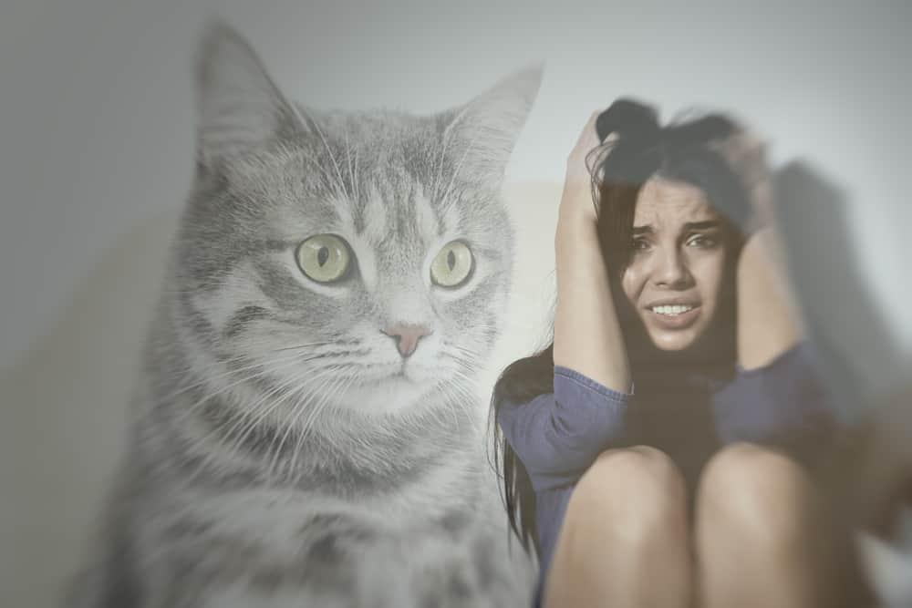 فوبيا القطط: يخشى بعض الناس من تلك الكائنات اللطيفة لكن هناك حل
