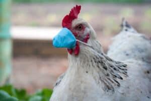 الصين تعلن عن تسجيل أول إصابة بشرية بإنفلونزا الطيور