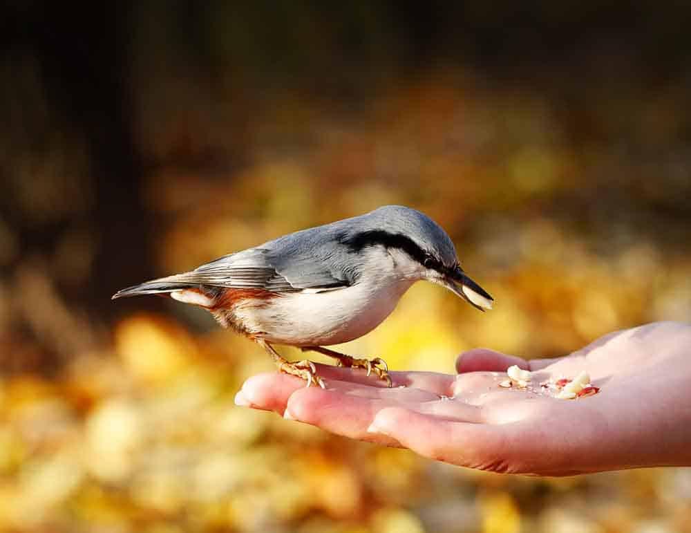 هل تحب إطعام الطيور؟ إليك دليل الخبراء لإطعام الأنواع المختلفة