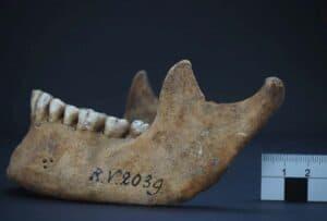 ما الذي يمكن أن نتعلّمه عن أصول الموت الأسود من ضحية عمرها 5000 عام؟