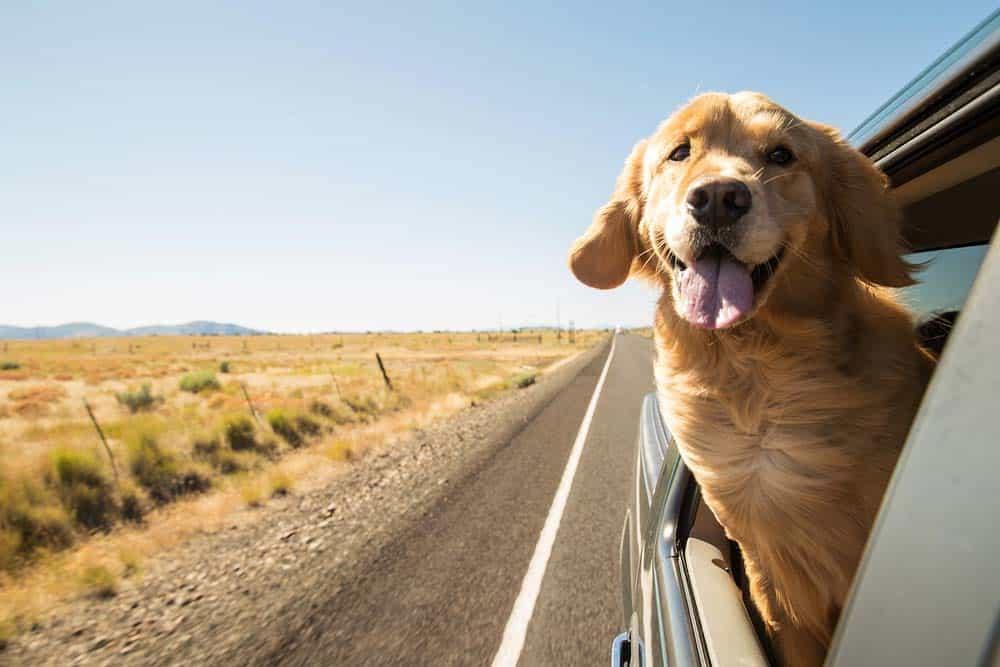 مثل البشر: متى يكون الموت الرحيم للحيوانات الأليفة أخلاقياً؟