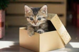 لماذا تحب القطط الجلوس في صناديق؟