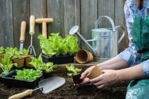 6 نصائح لزراعة حديقة صغيرة أمام منزلك