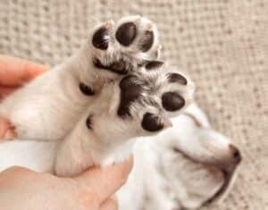 دليلك في المنزل: خطوات صناعة مرطب طبيعي لأقدام حيوانك الأليف