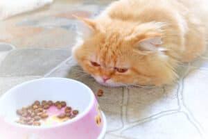 فقدان الشهية عند القطط: أسبابه وعلاجه