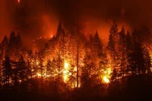 يتسبب الإنسان بـ90% منها وللطبيعة دورها أيضاً في حرائق الغابات