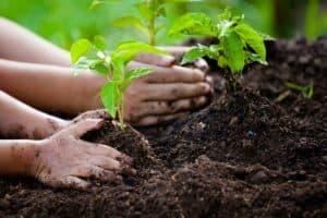 الفوائد العظيمة للبكتيريا المثبتة للنيتروجين في التربة