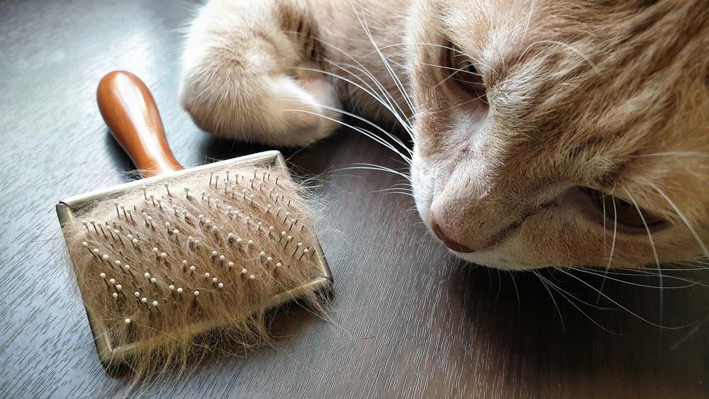 علاج كرات الشعر